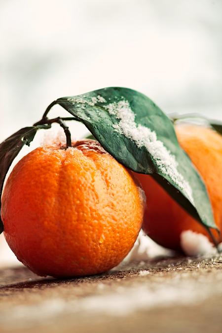 Arancio nella Neve